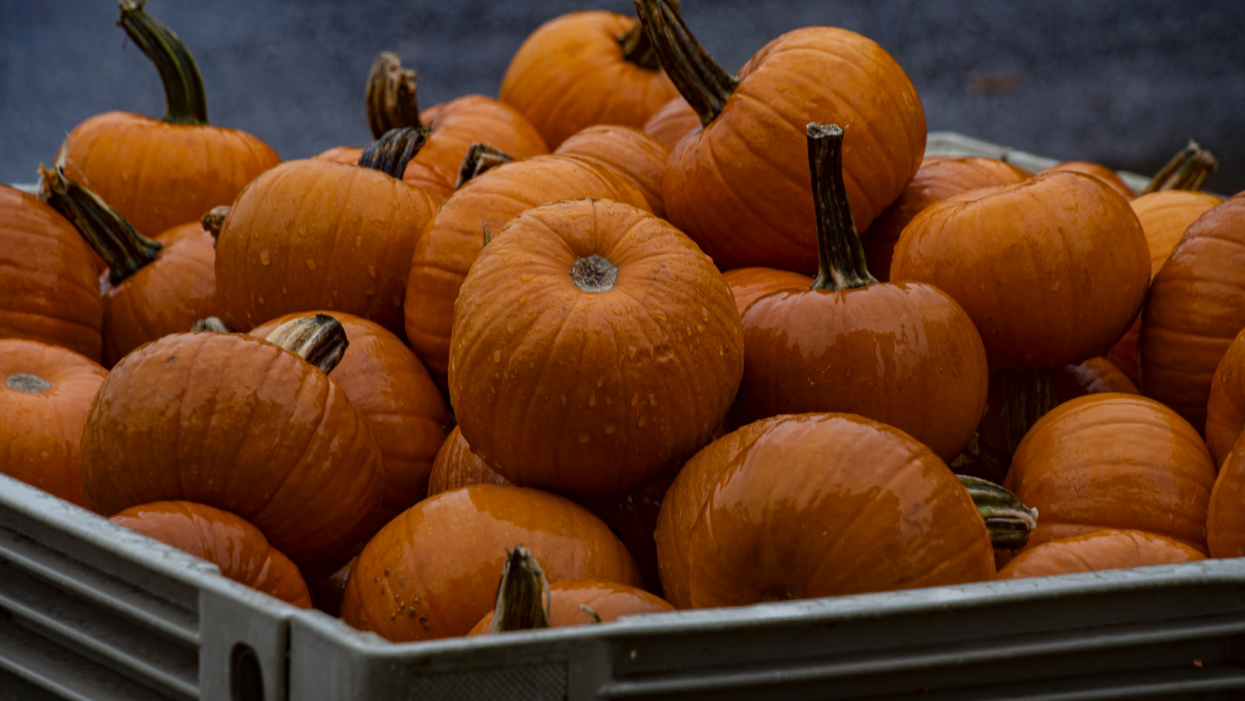 The Weather Is So Bad This Week That Some Canadian Cities Are Postponing Halloween
