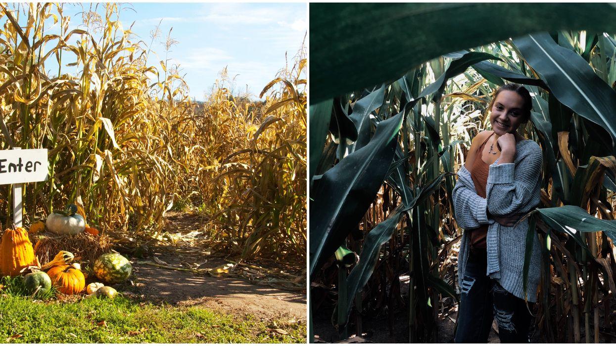 San Antonio's Only Corn Maze Is Open Through November