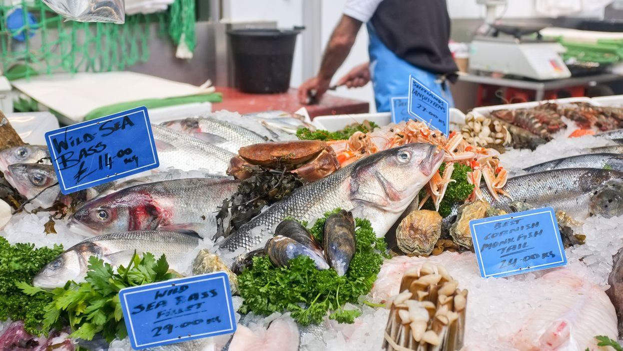 Florida Health Department Fish Advisory Chart Shows Mercury Contaminated Fish