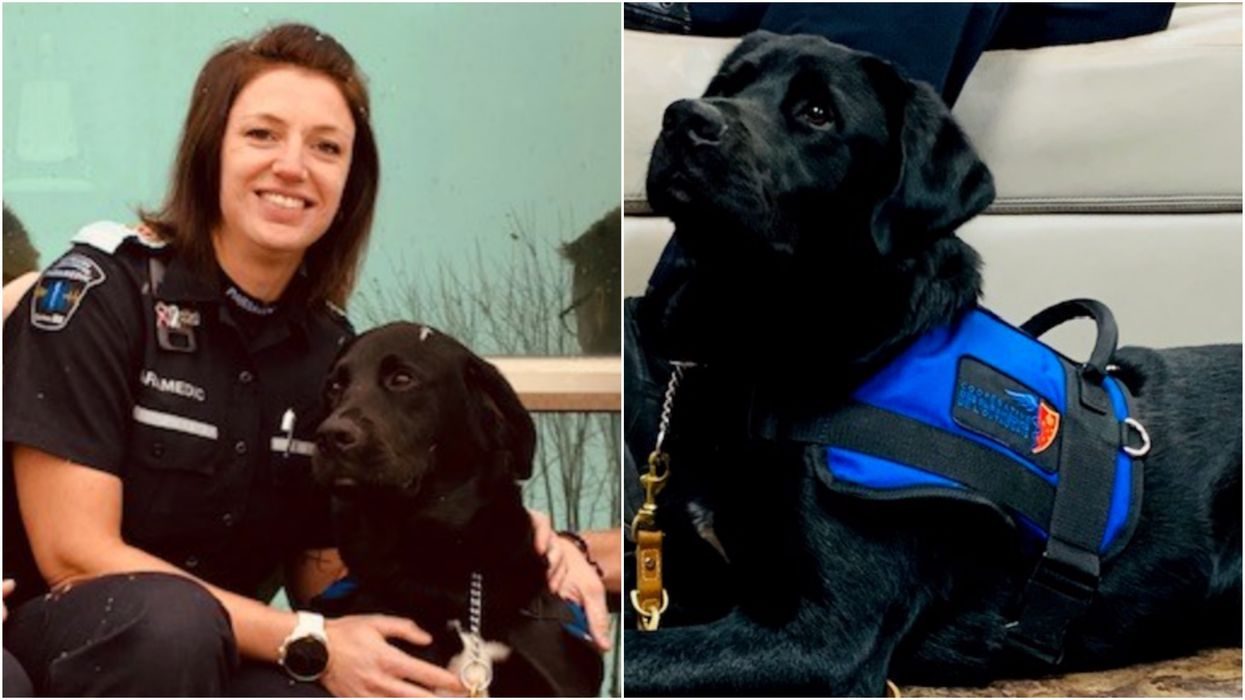A Quebec Paramedic Team Has A New Trauma Employee & He's Absolutely Adorable