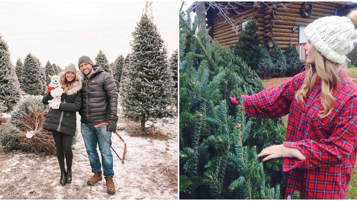 7 Enchanting Christmas Tree Farms To Visit Near Toronto This Holiday Season
