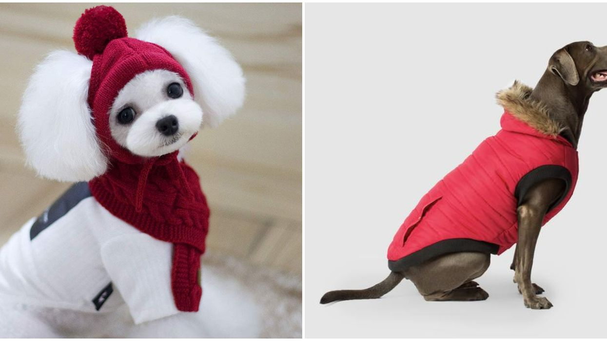 9 Winter Clothes For Dogs In Canada To Stay Warm During The Coldest Season