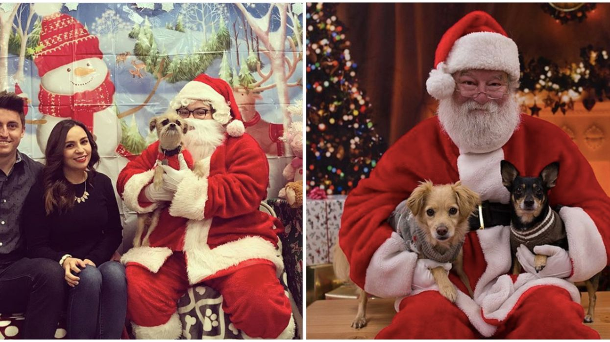 Santa Pet Photos In Toronto: Bring Your Furry Friend To Join In The Holiday Fun