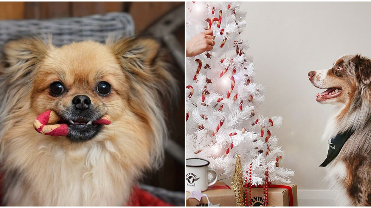 Dog Christmas Market Near Ottawa Makes The Best Holiday Date Night With Your Pup