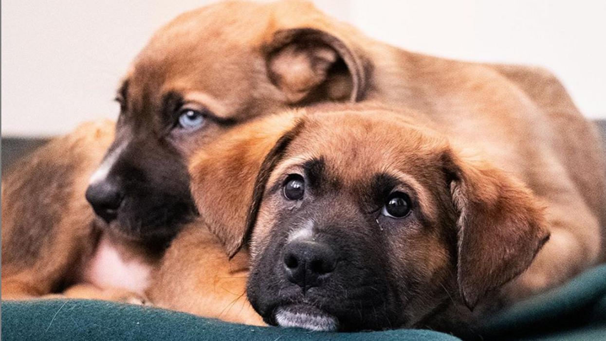 Le micropuçage des animaux devient obligatoire à Montréal et la date limite approche