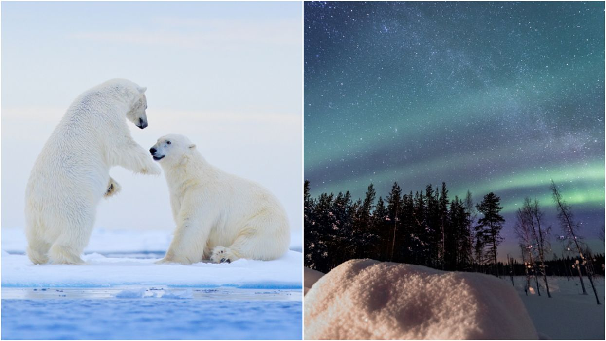 """Canada's """"Polar Bear Capital of the World"""" Is The Most Magical Place On Earth"""
