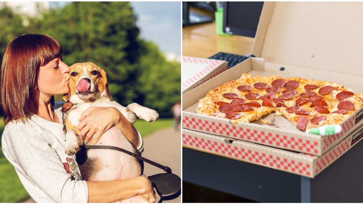 You Can Order A Puppy And Pizza Playdate For Free In Vancouver Tomorrow
