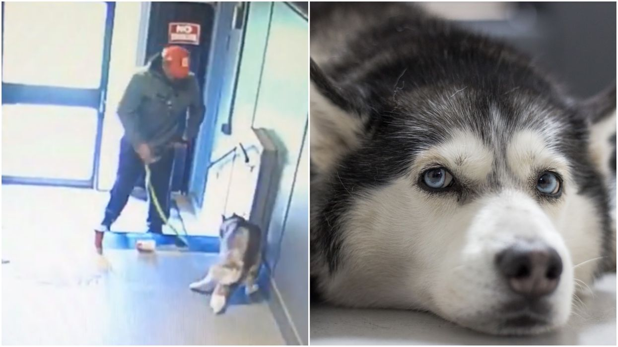 A Canadian Man Has Been Convicted Of Animal Cruelty For Giving His Dog Anxiety