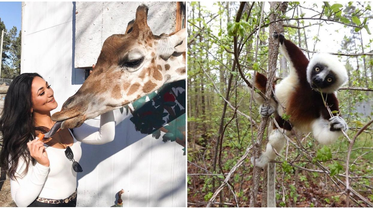 These North Carolina Animal Encounters Are Perfect For Zoo Lovers