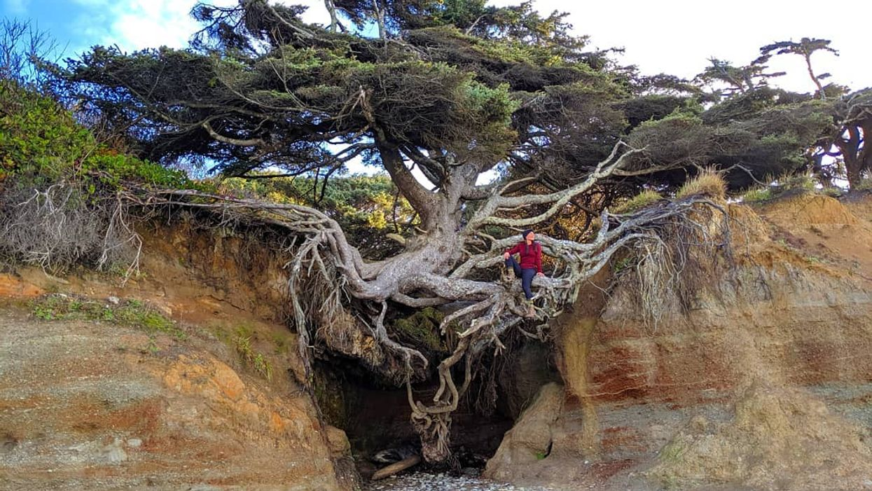You'll Find A Magical Tree Of Life On This Beach Walk In Washington