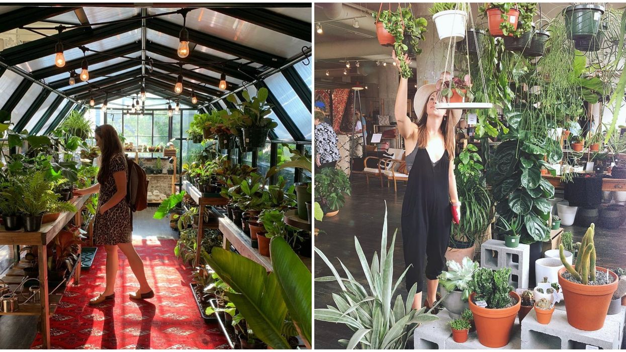 This Plant Shop In Atlanta Is Truly A Plant Lover's Hidden Dream