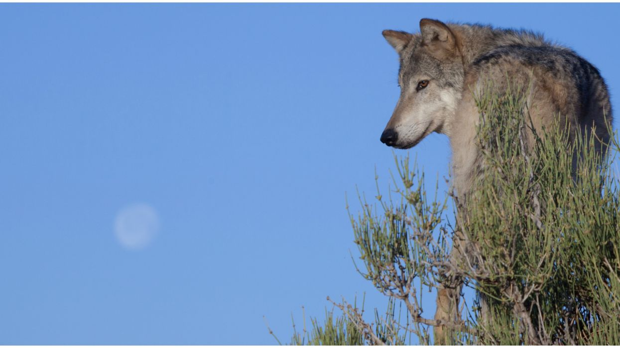 2020 Wolf Moon Will Rise In Florida Skies
