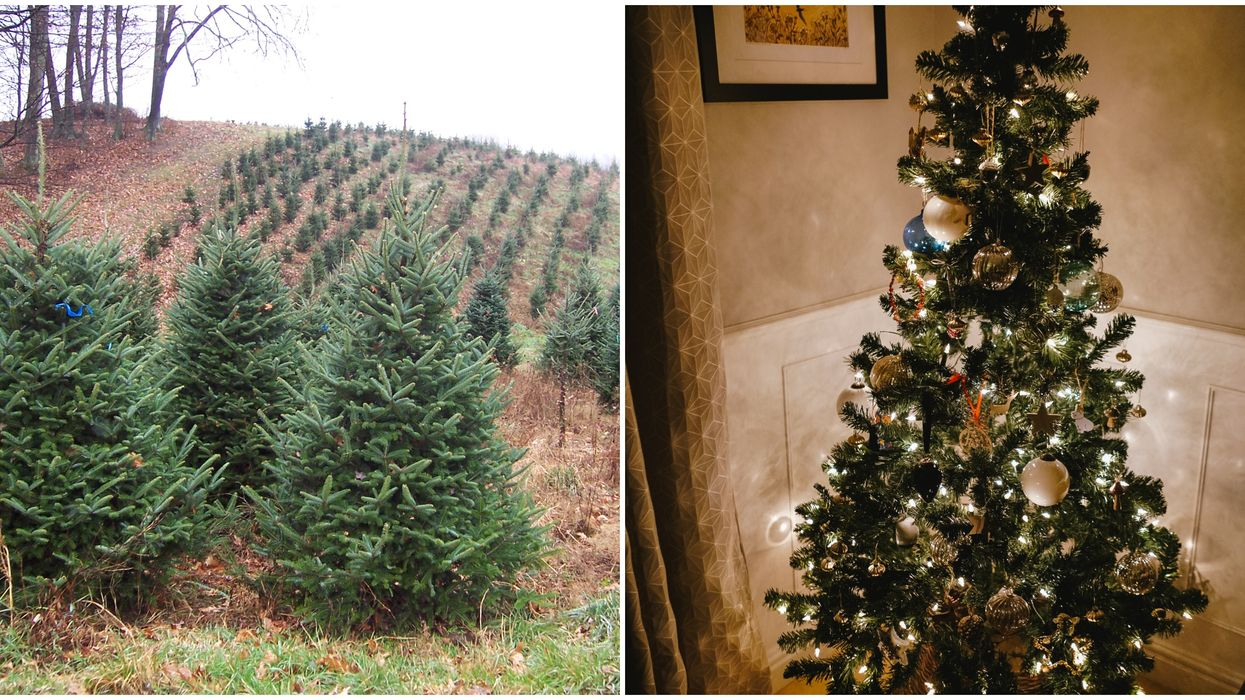 Christmas Trees In Canada Are Running Low And Prices Are Rising