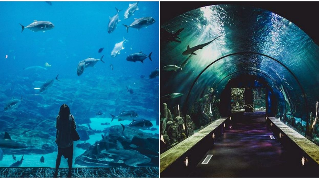 A Florida Aquarium Is Getting The Largest Virtual Reality Aquarium In The State