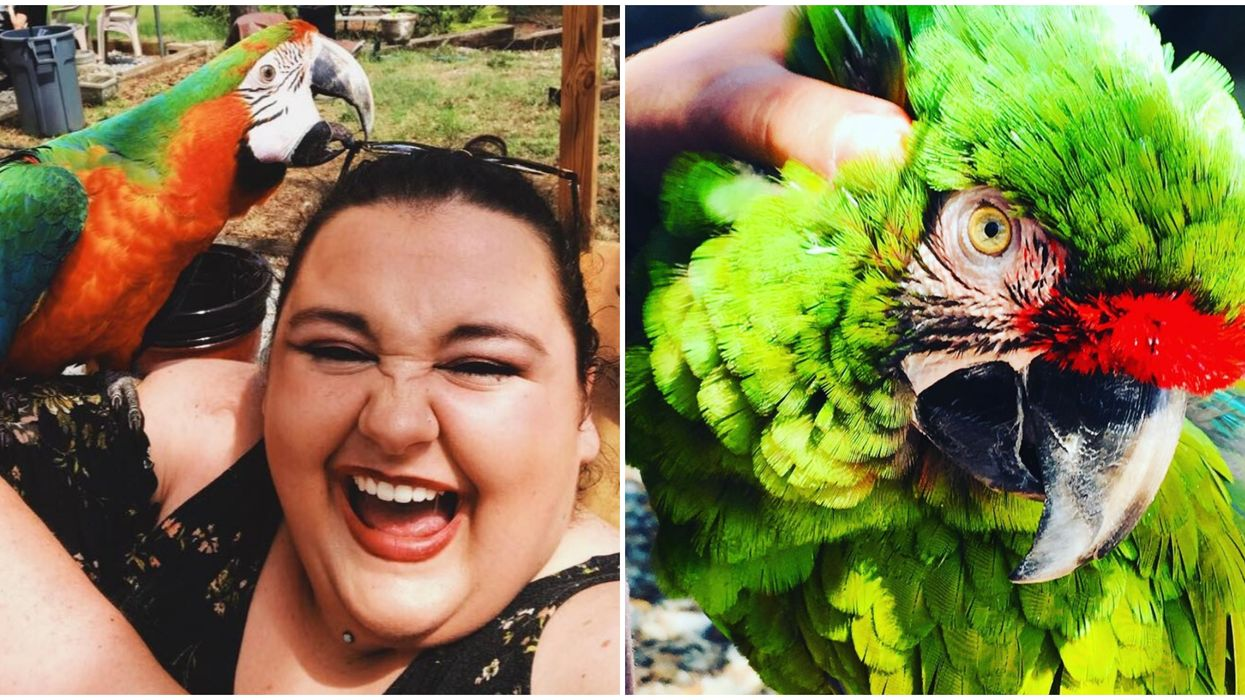 This Bird Sanctuary In Georgia Is An Animal-Lovers' Dream Come True