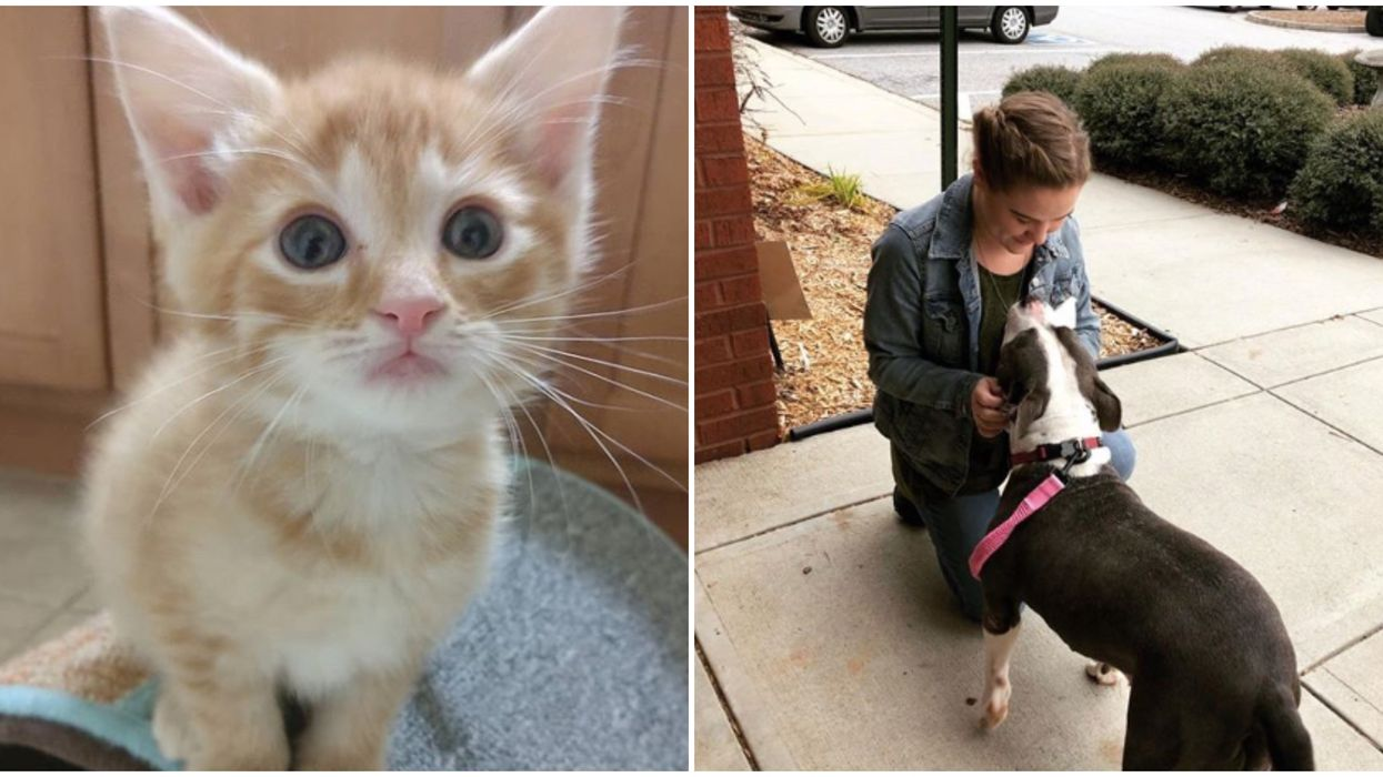Free Pet Adoptions In Georgia Until The End Of The Year