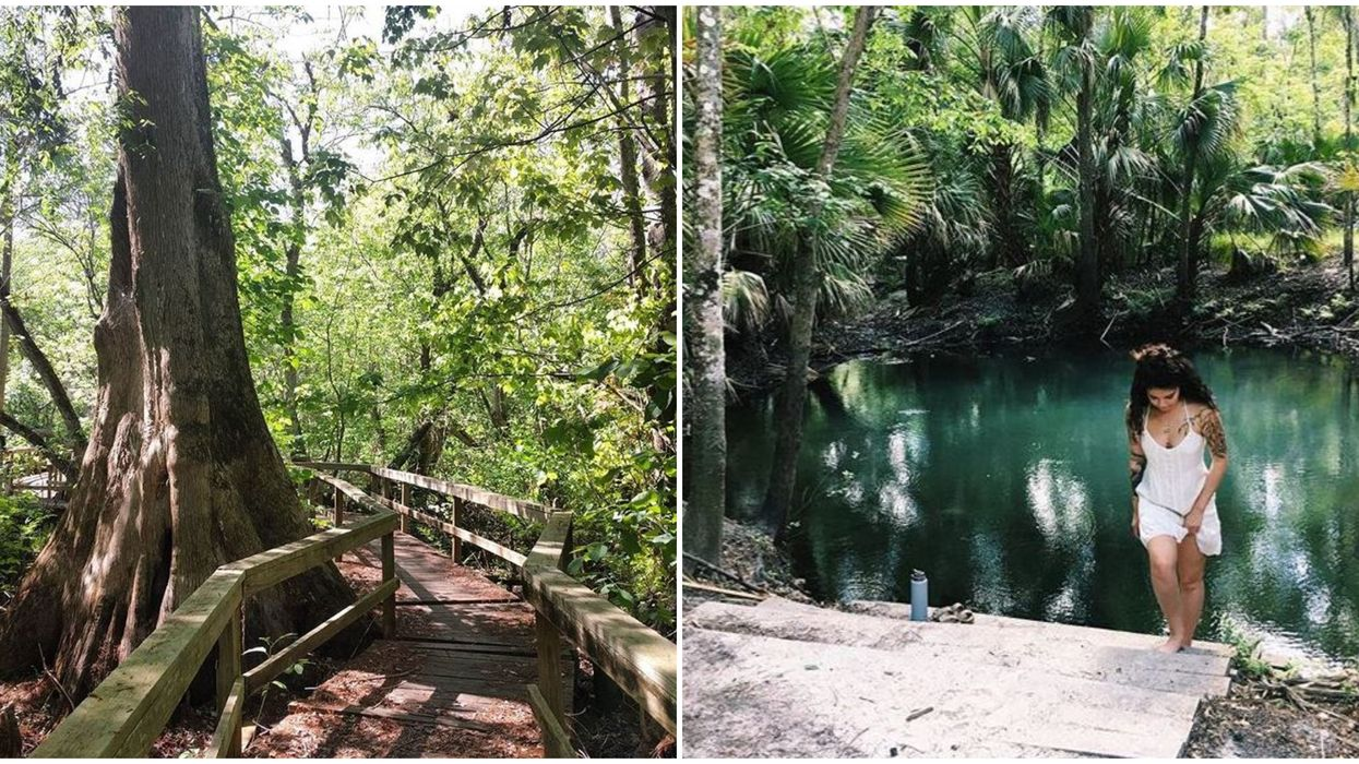 Places To Hike In Florida Hike During Winter Season Includes Spring Hammock Preserve