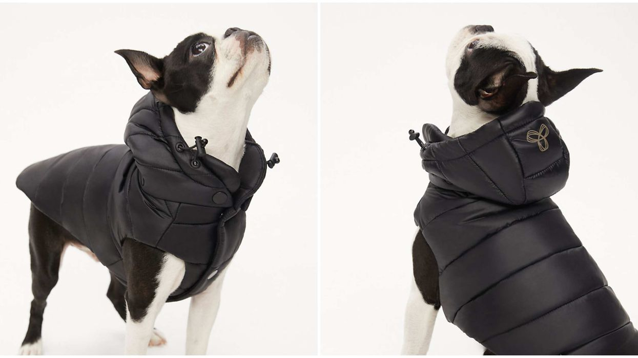 Aritzia's Dog Jacket Is Like A Super Puff For Your Pup & It's Adorable
