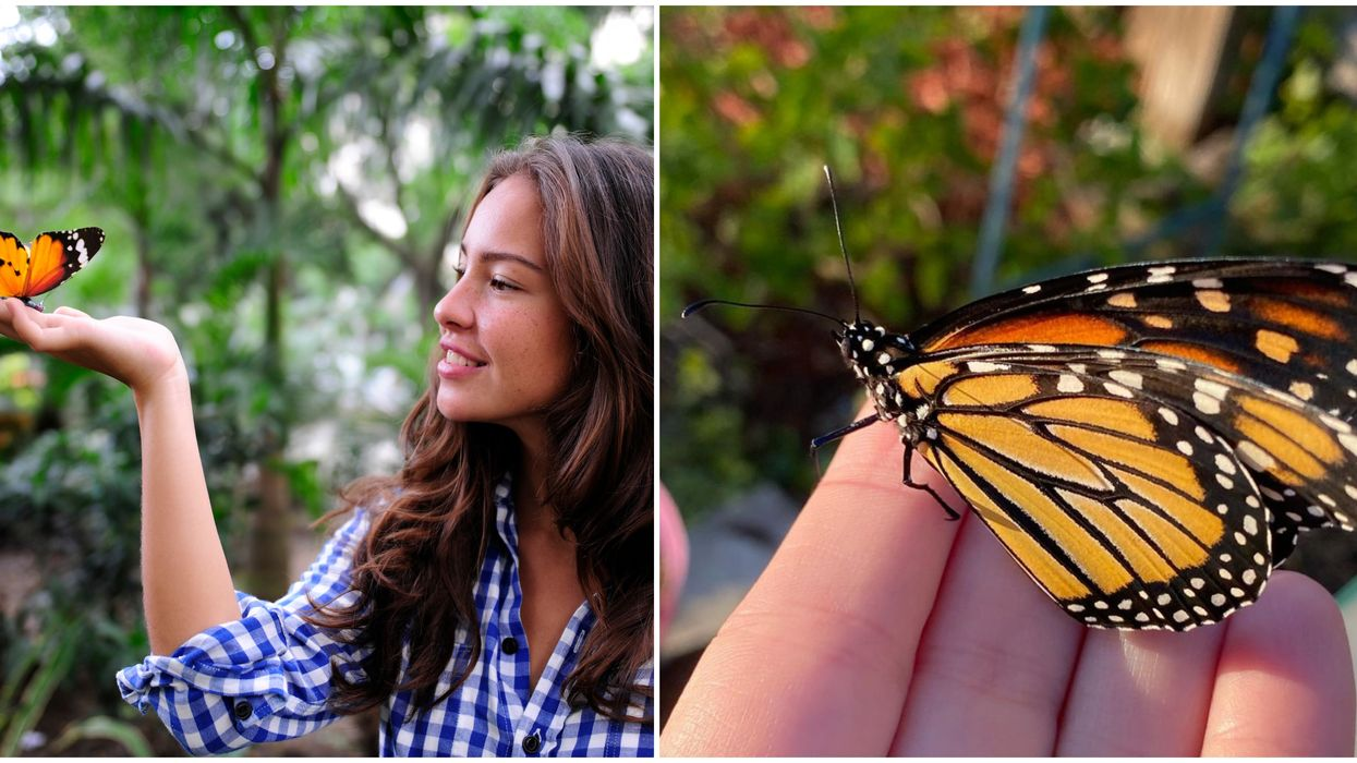 Dallas' Butterfly & Flower Festival This Spring Will Let You Walk Among Butterflies For Only $10