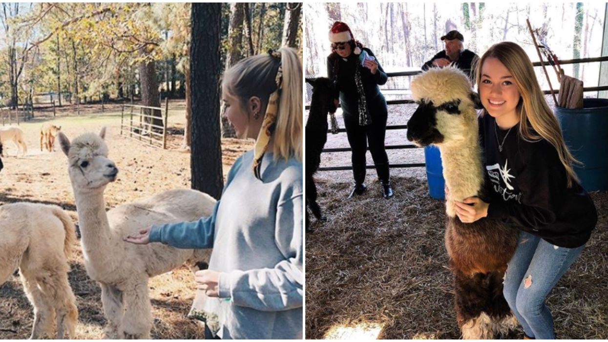 Things To Do In Georgia Include Exploring This Massive Alpaca Farm For Only $10
