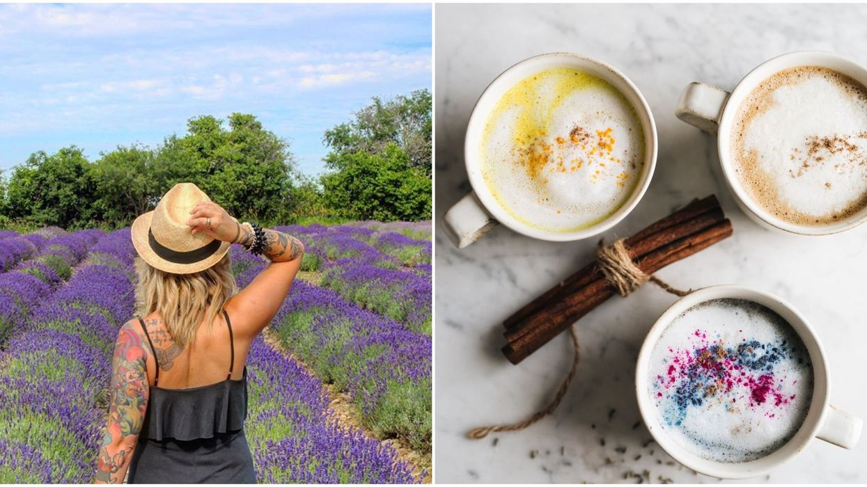 12 Places In Ontario Where You Can Satisfy Your Lavender Fix This Spring