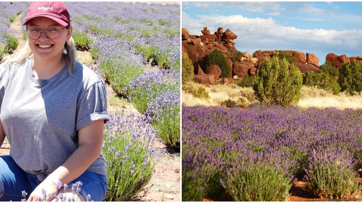 Arizona's Lavender Farm Festival Will Have Over 35,000 Blooms This June