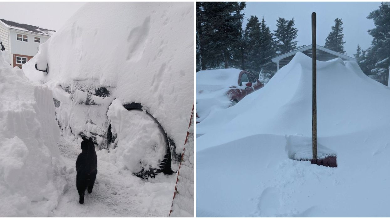 Newfoundland Weather Is Out Of Control Today With 50cm Of Snow & Power Outages