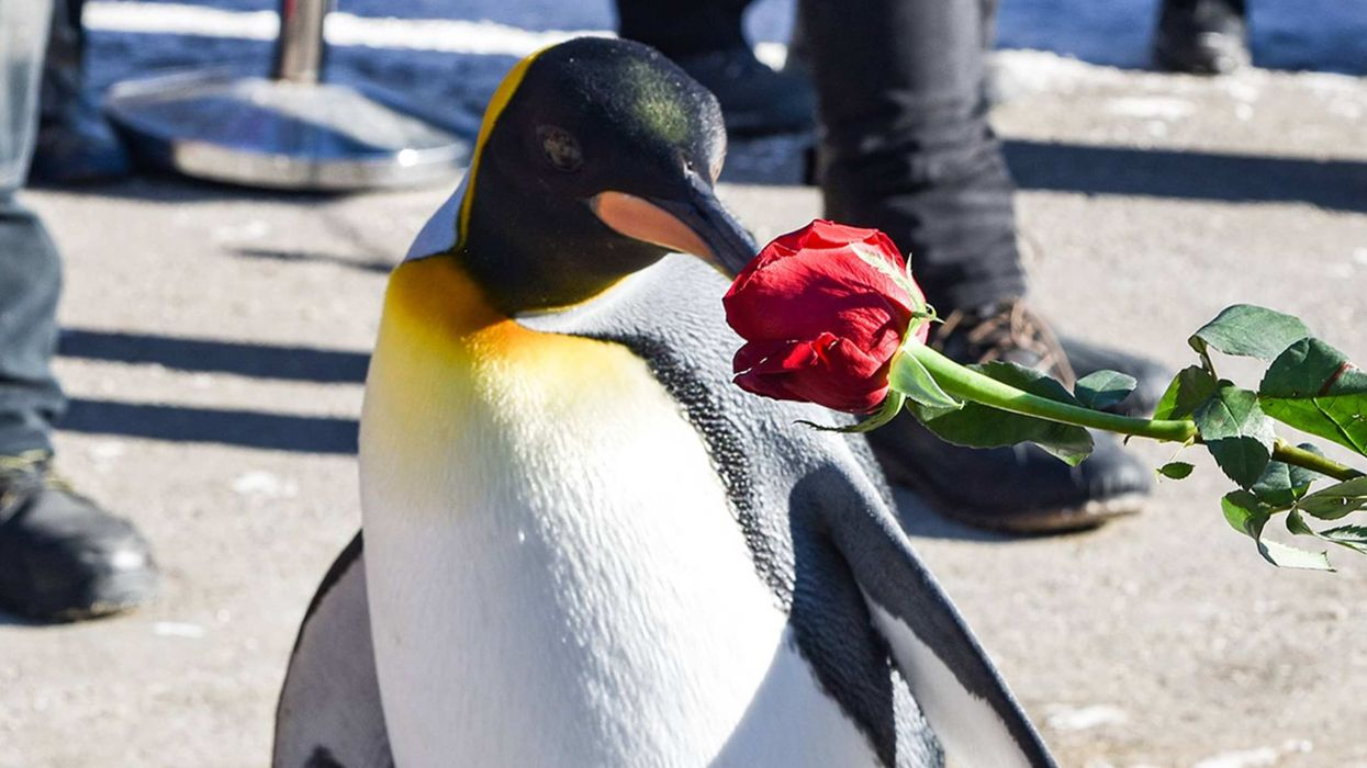 Valentine's Day Dinner At The Calgary Zoo Is The Most Romantic Date Night Idea
