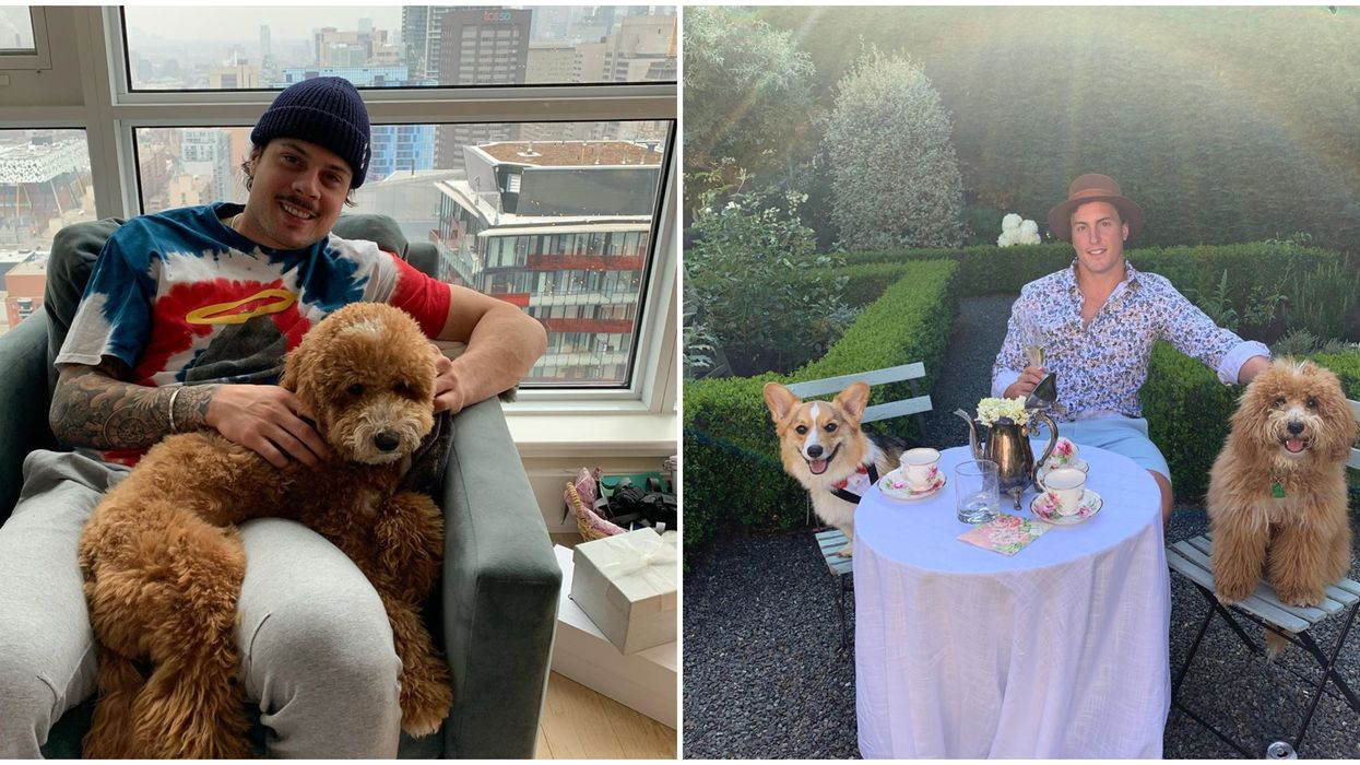 Toronto Maple Leafs Dogs Photos Show They're A Team Full Of Proud Pup Papas