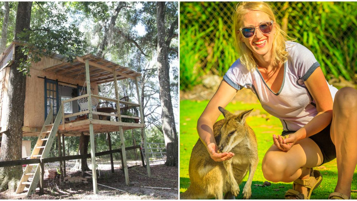 Airbnb In Florida For Glamping Has Kangaroo You Can Pet