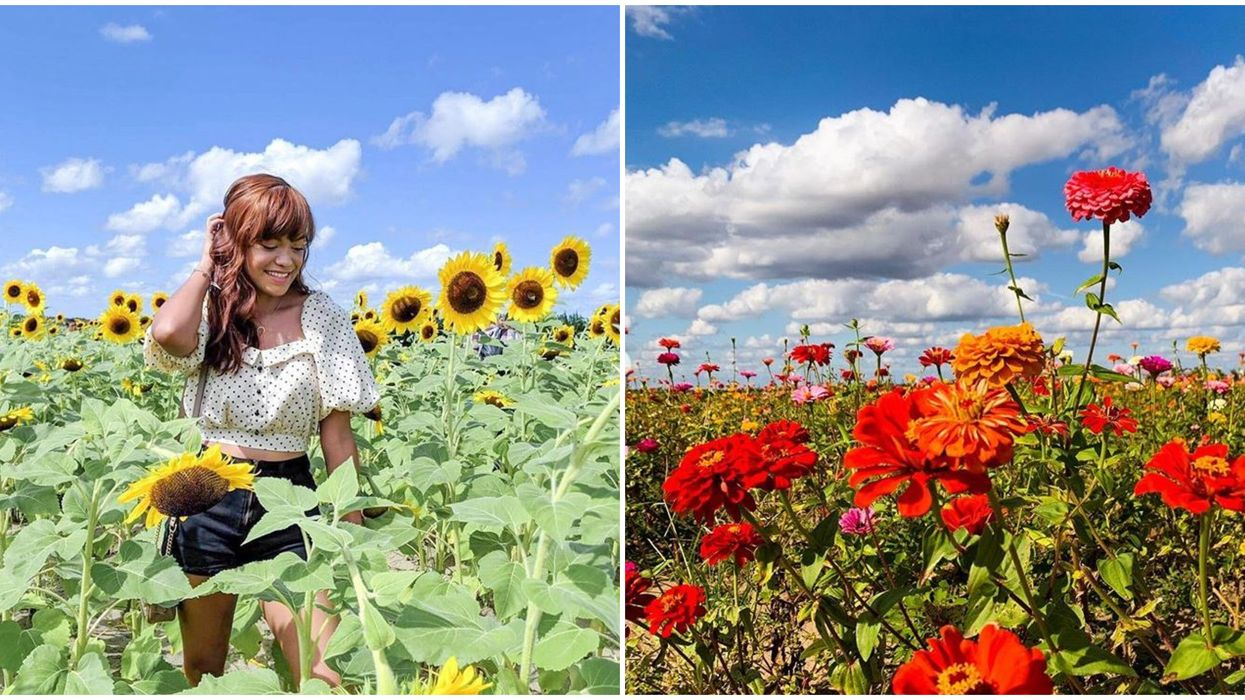 Southern Hill Farms In Florida Lets You Pick Wildflowers For Only $1
