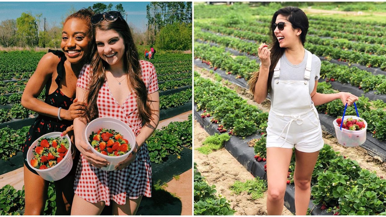 Houston's Massive Farm Is Letting You Pick Your Own Strawberries