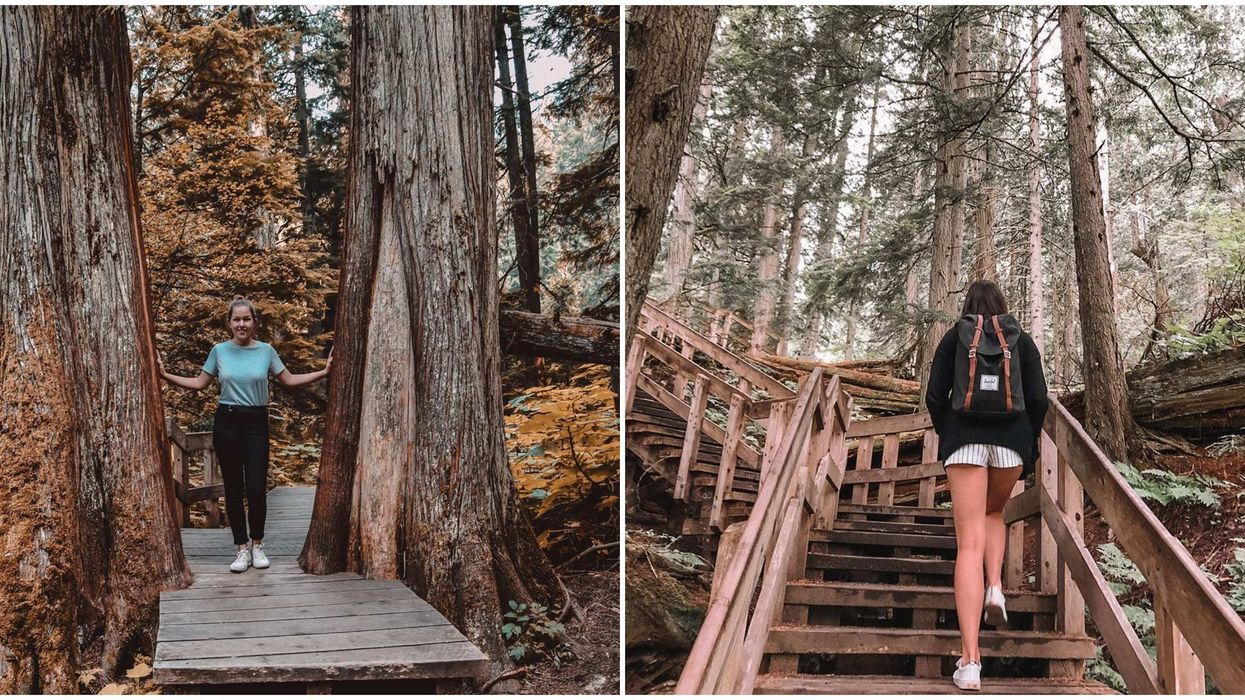 Rainforest Trail In BC Is The Perfect Boardwalk For Your Friend Who Hates Hiking