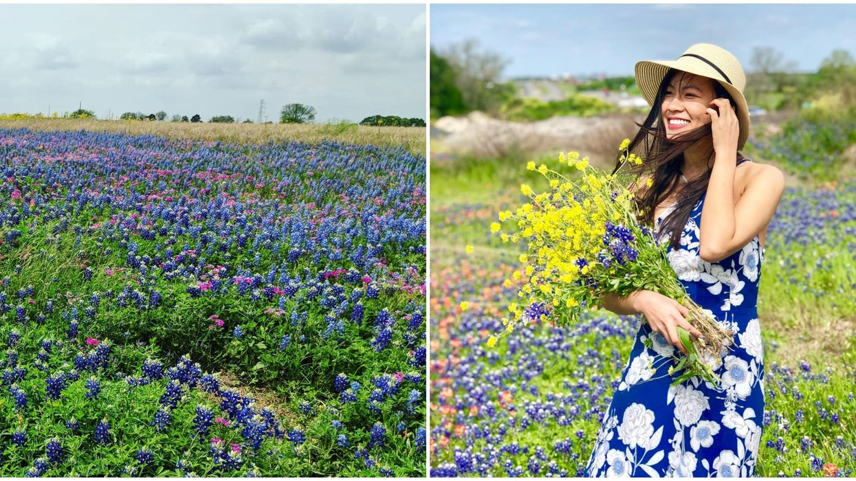 This Gorgeous Texas Bluebonnet Fest Is Coming In Spring