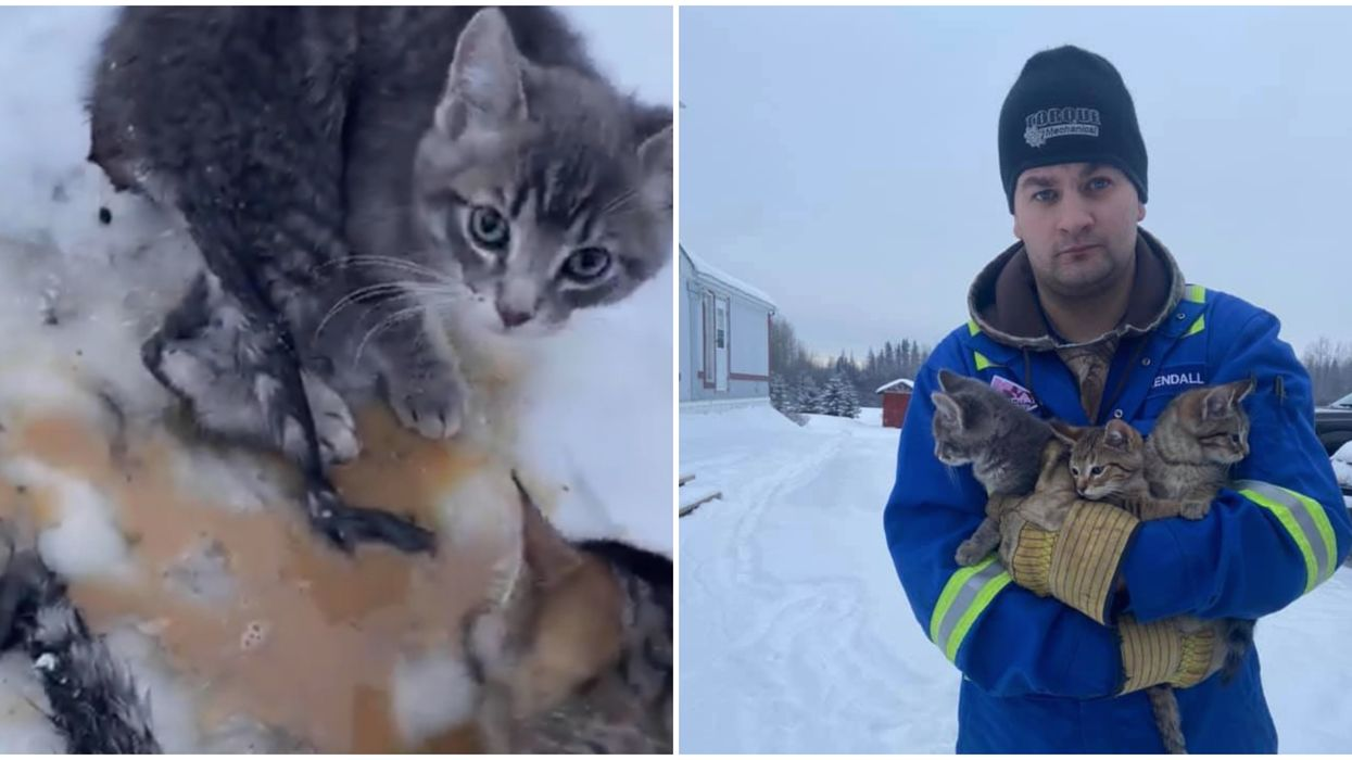 Alberta Cat Rescue Video Shows Man Using Warm Coffee Rescue 3 Frozen Kittens (VIDEO)