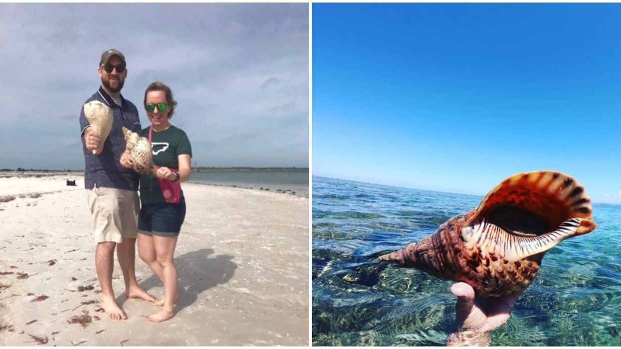 Fun Things To Do In Florida Include Odyssey Shelling Cruise For Giant Seashells