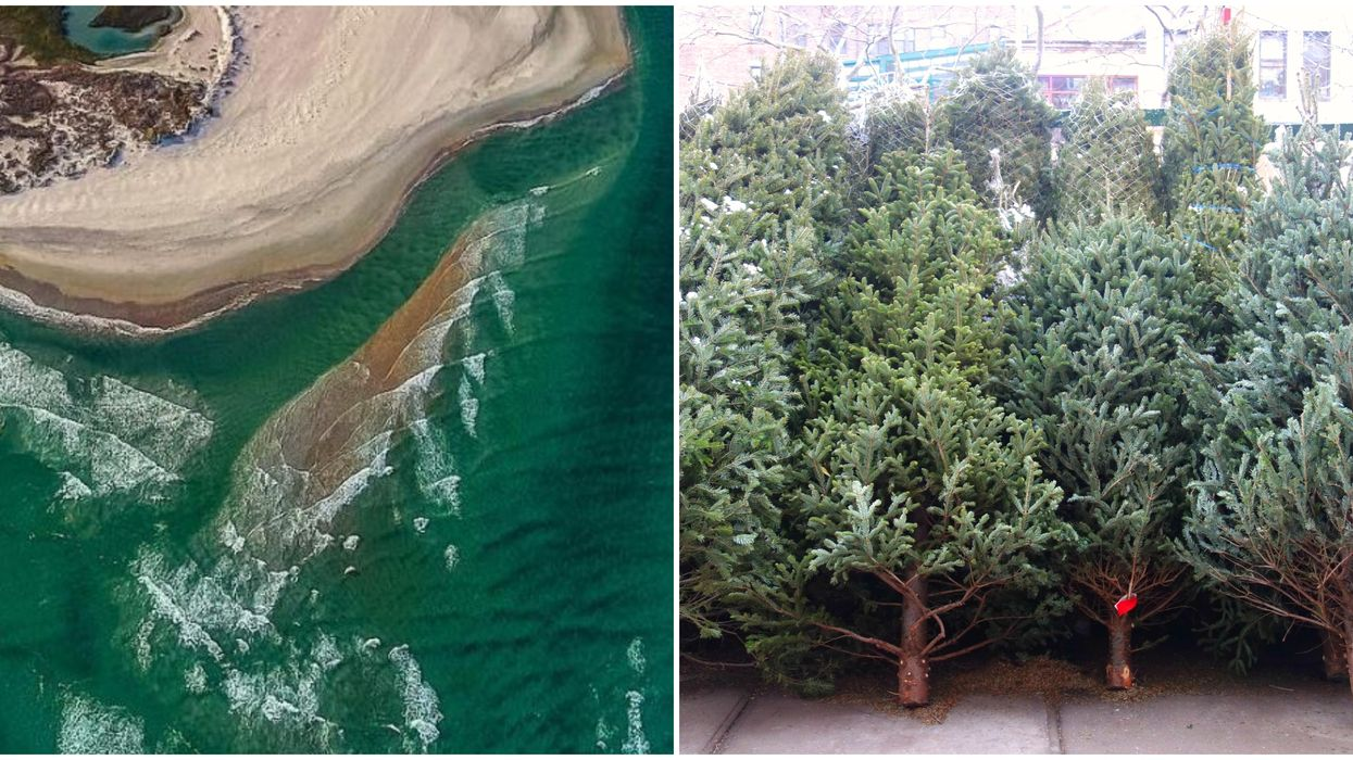 Beaches In North Carolina Are Beautiful Thanks To Christmas Trees