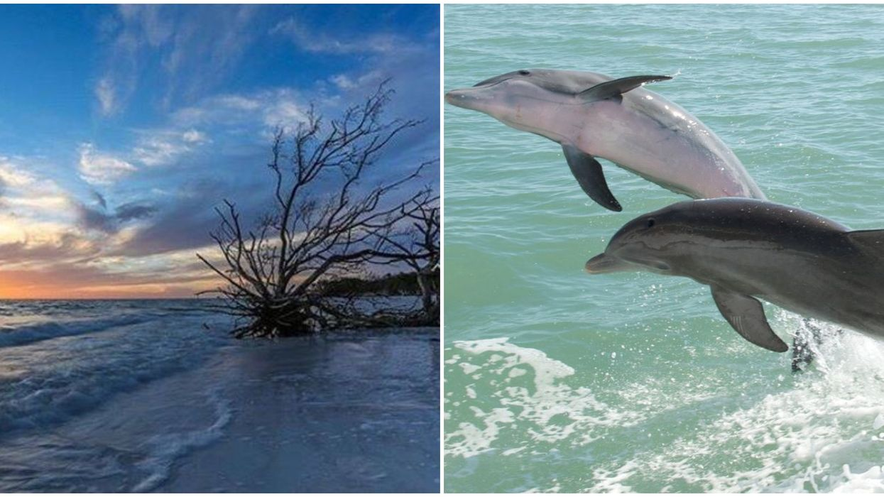 Odyssey Cruises In Florida Takes You To See Wild Dolphins For Less Than $20
