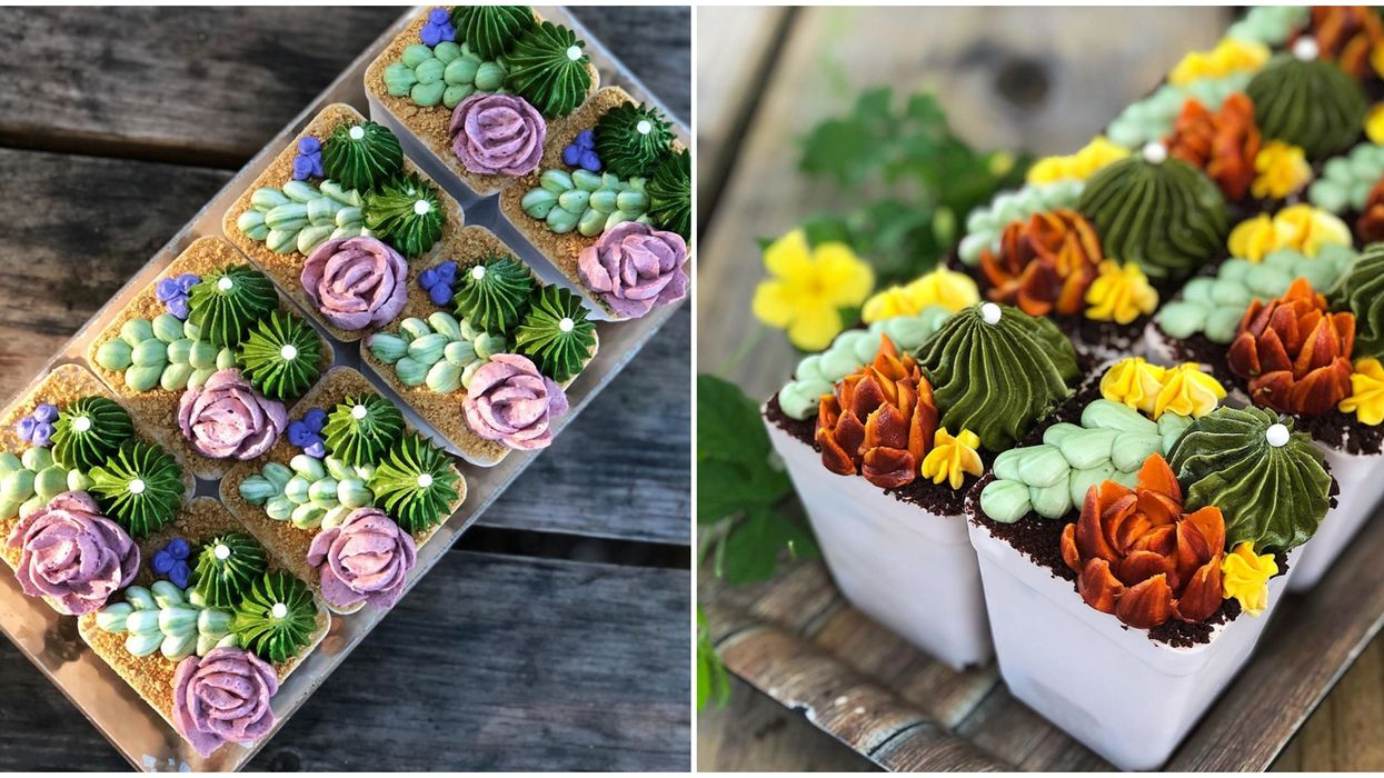 Bakery In Orlando Crafts The Cutest Vegan Sweets Including Edible Succulent Flowerpots
