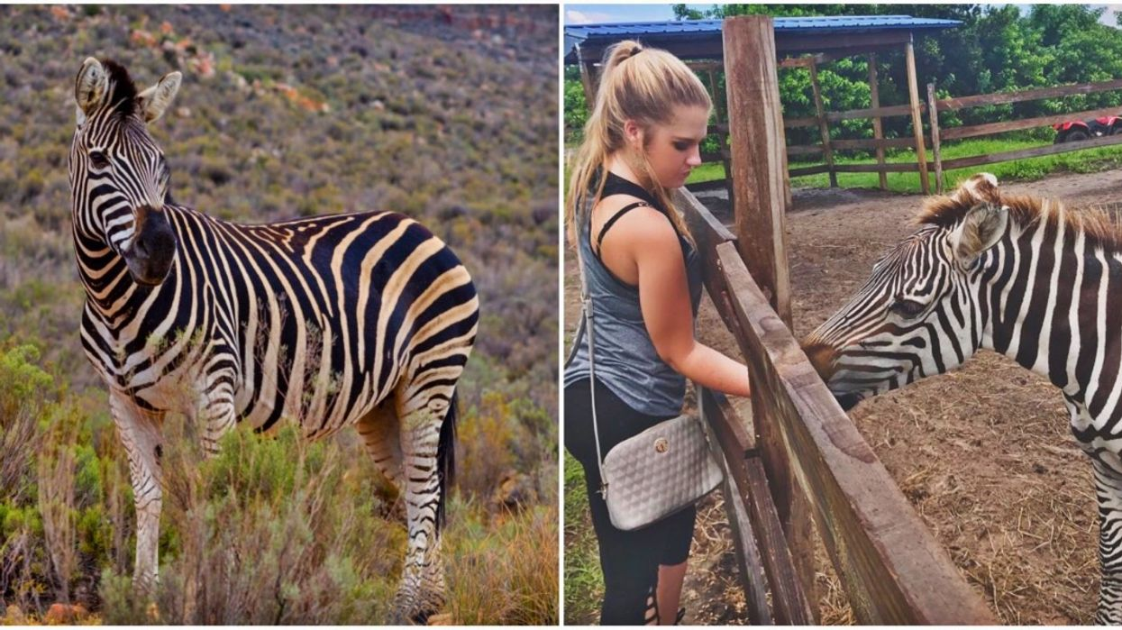This Fun Day Trip From Tampa Will Let You Pet Zebras