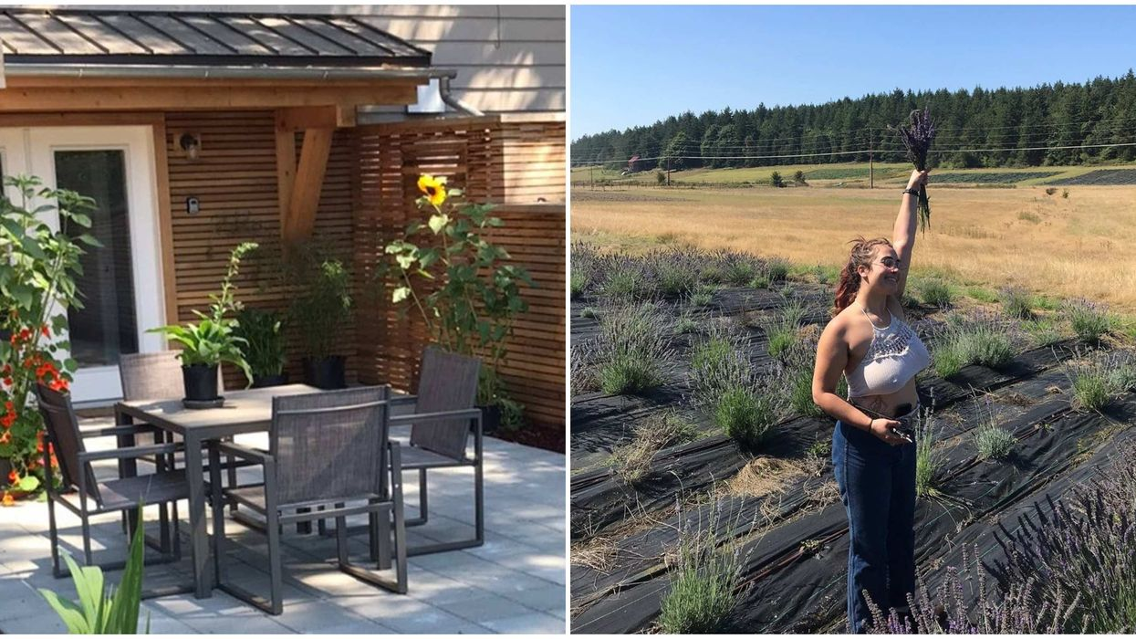 Lavender Airbnb Near BC: You Can Sleep By 10 Acres Of Blooming Flowers