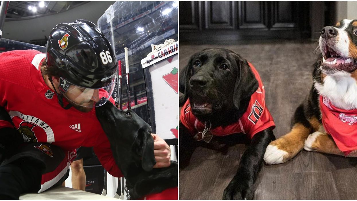 You Can Meet & Adopt Adorable Doggos At An Ottawa Sens Game Next Week