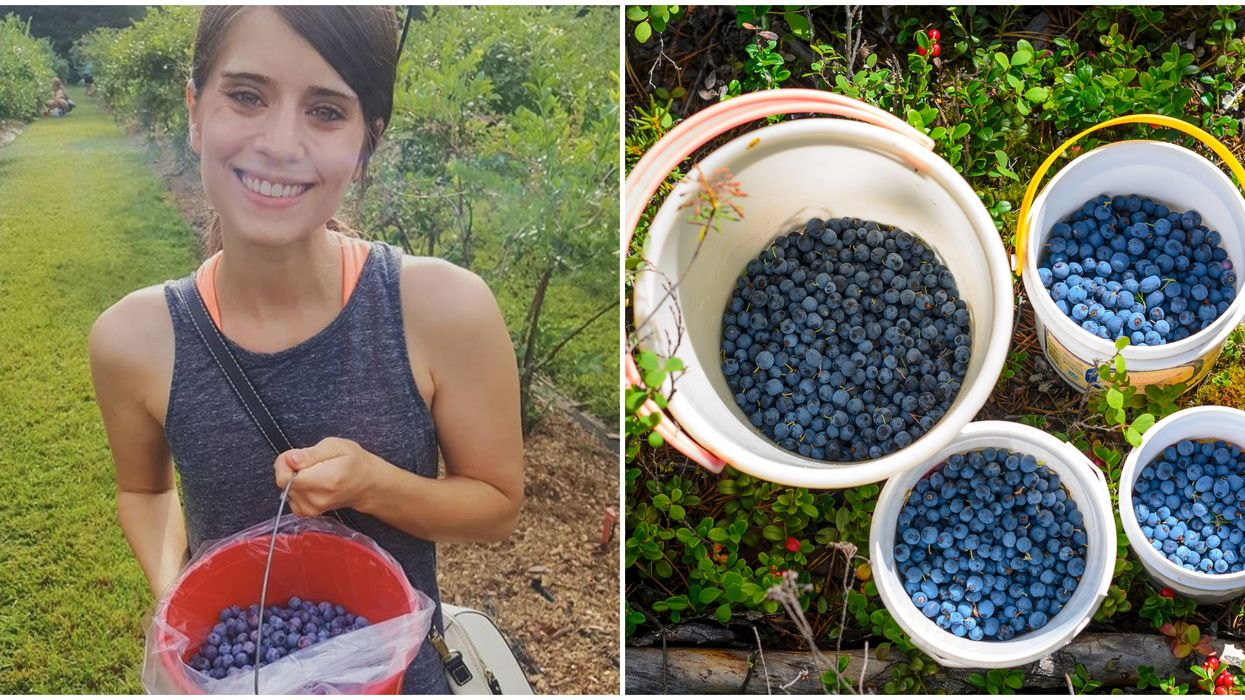 Fruit Picking In North Carolina Is Super Sweet At This Blueberry Farm