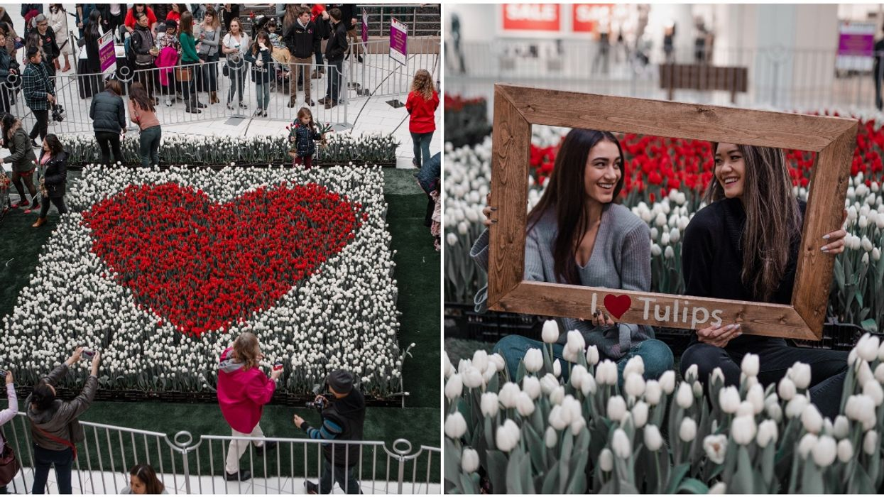 I Heart Tulips Is Coming To Metropolis Next Month With 14,000 Blooming Tulips