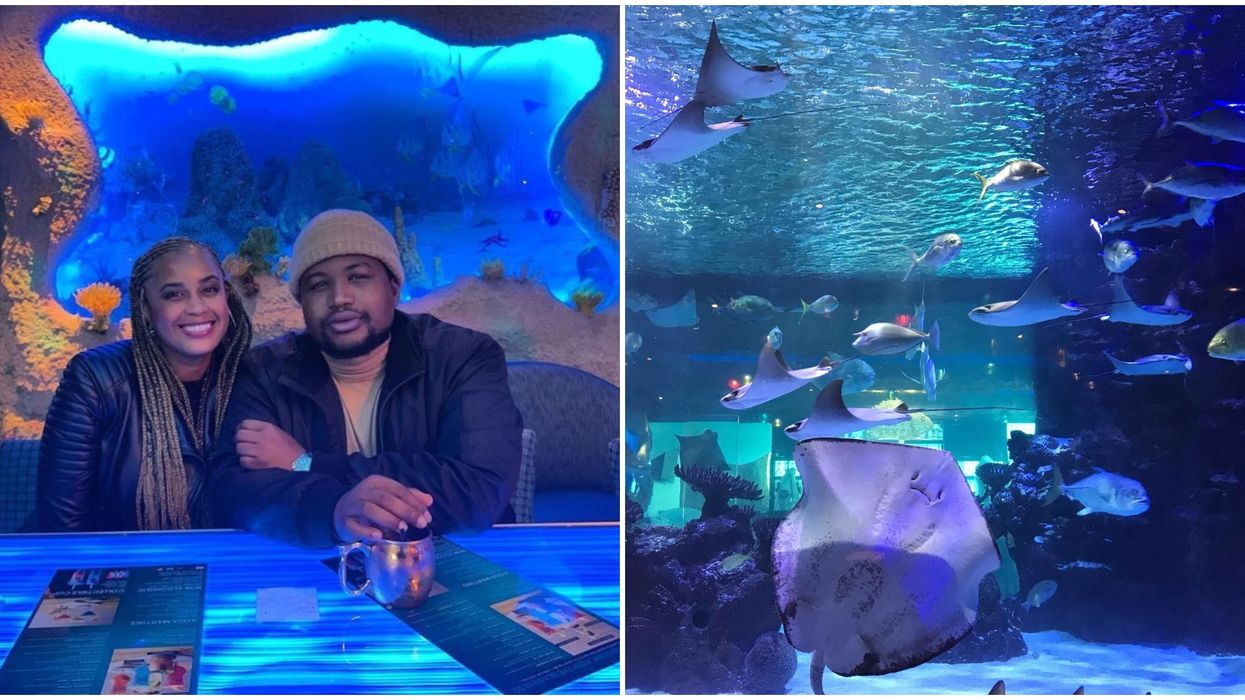 The Houston Aquarium Is Letting You Dine Under The Sea This Valentine's Day