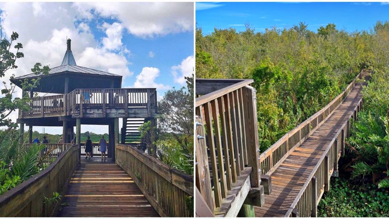 Sawgrass Lake Park In St. Pete Has Tower With Some Of The Best Views Of Tampa Bay