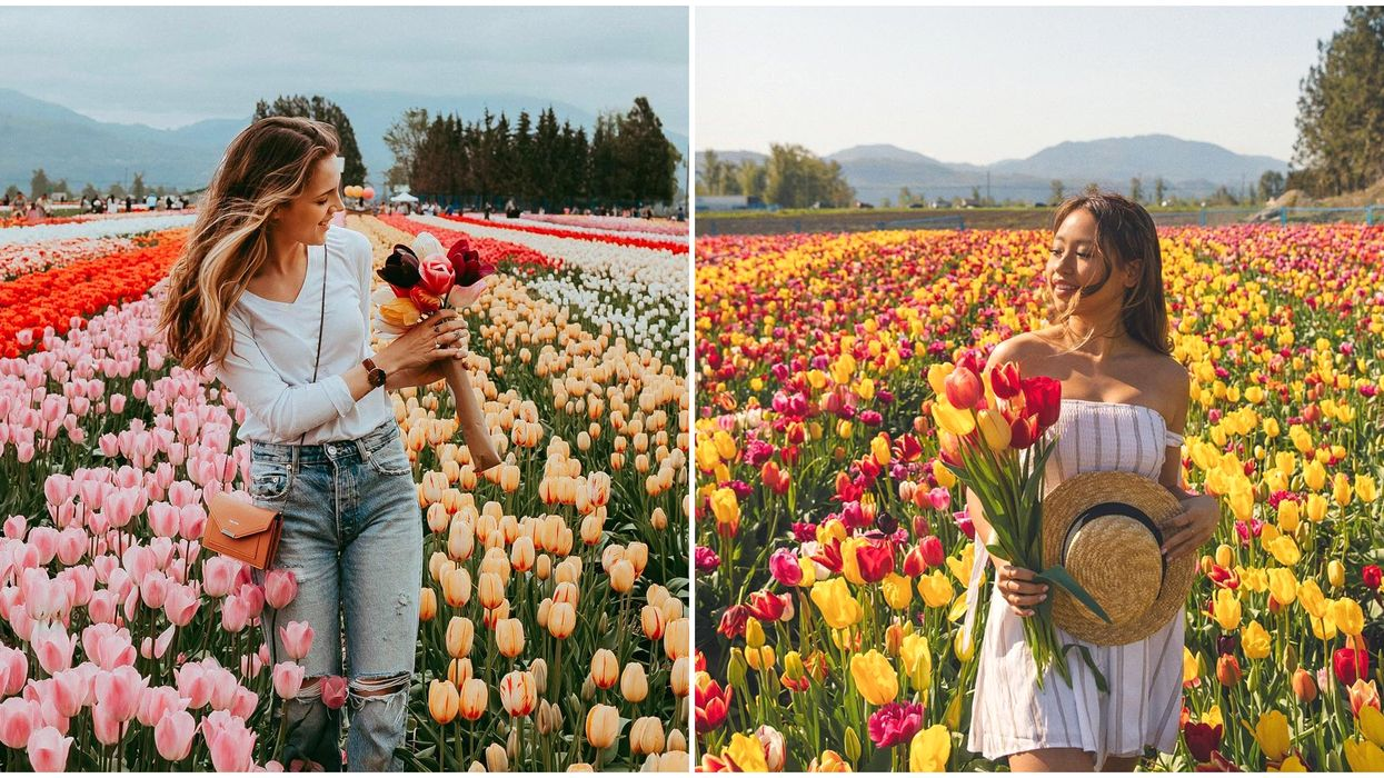 Bloom Tulip Festival: You Can Pick Your Own Bouquet Near Vancouver This Spring