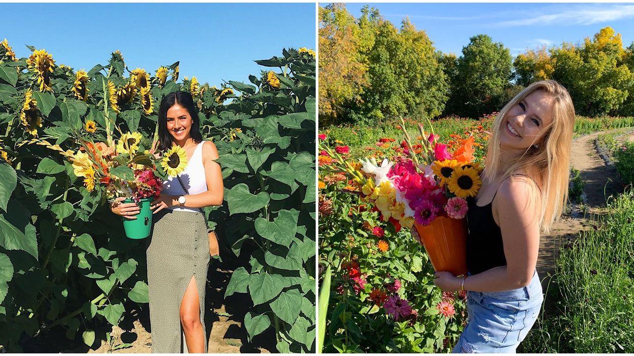 Flower Farm In Saskatchewan Where You Can Pick Your Own Bouquet Is So Cute