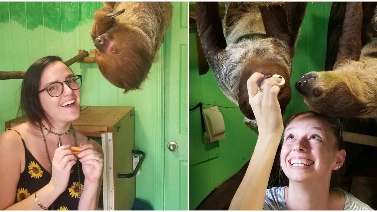 Georgia Zoo Sloth Encounters Let You Pet & Feed These Slo-Mo Cuties