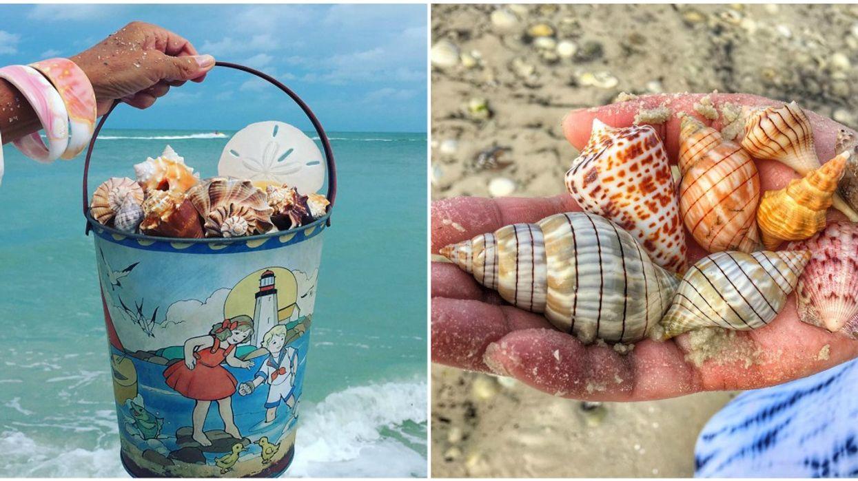 Find Rare Florida Shells On Kice Island Kayaking Tour